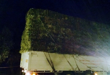 First load of hay