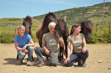 The Skyros Stallion Liberty Team